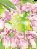 Love,May,Leaf,Growth,Grass,Nature,Outdoors,Summer,Moving Up,Red,Postcard,Petal,Freshness,Plant,Purple,Pink Color,Season,Tulip,Yellow,Flower Head,Defocused,Day,Multi Colored,Close-up,Bouquet,Backgrounds