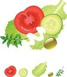 Salad,Lettuce,Tomato,Cucumber,Olive,Mayonnaise,Leaf,Vector,Ilustration,Vegetable,Thyme,Food,Cross Section,Isolated,Sauces,Green Color,Raw Food,Illustrations And Vector Art,Fruits And Vegetables,Green Olive,Healthy Eating,Isolated On White,Food And Drink