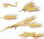 Wheat,Bread,Cereal Plant,Flour,Seed,Corn - Crop,Harvesting,Bow,Gold Colored,Raw Food,Grain And Cereal Products,Illustrations And Vector Art,Food And Drink,Yellow,Grass Family