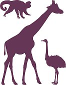 Animals In The Wild,Monkey,Backgrounds,Symbol,Sign,Computer Icon,Ostrich,Set,Giraffe,Safari Animals,Wildlife,Zoo,Illustration,Silhouette