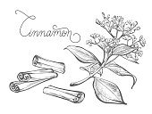 Herb,Condiment,Scented,Cinnamon,Unripe,Ingredient,Cooking,Isolated,Food,Organic,Spice,Plant