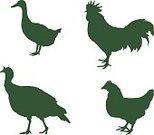 Mascot,Chicken - Bird,Symbol,Sign,Computer Icon,Backgrounds,Goose,Duck,Banner,Silhouette,Animal,Rooster,Turkey - Bird,Zoo,Set,Vector,Bird,Poultry,Illustration,Livestock