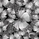 Seamless,Insect,Decoration,Wallpaper Pattern,Pattern,Illustration,Nature,Backgrounds,Butterfly - Insect,Vector