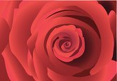 Rose - Flower,Spiral,Flower,Single Flower,Perfection,Close-up,Vector,Red,Backgrounds,Romance,Floral Pattern,Open,Petal,Idyllic,Swirl,Ilustration,Elegance