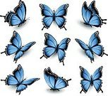 No People,Animal,Collection,Illustration,Nature,Insect,Vector,Blue,Multi Colored