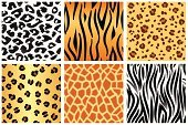 Tiger,Animal Print,Cheetah,Pattern,Tiger Skin,Striped,Leopard Print,Seamless,Giraffe,Tiger Print,Giraffe Print,Backgrounds,Mountain Lion,Animal Skin,Vector,Spotted,Zebra Print,Bobcat,Undomesticated Cat,Fur,Camouflage,Design,Ilustration,Camouflage Clothing,Wallpaper Pattern,Safari Animals,Animals In The Wild,Wildlife,Wild Animals,Illustrations And Vector Art,Animal Backgrounds,Animals And Pets