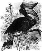 Antique,Hornbill,Ilustration,Engraved Image,Bird,Animal,Black And White,Nature,Tropical Climate,Old-fashioned,Monoprint,Tropical Bird,Image Created 1870-1879,Biology,Image Created 19th Century,Perching,Wild Animals,Old,No People,Birds,Living Organism,Animals And Pets,Vertical,Outdoors,Wildlife,Environment