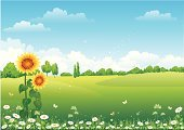 Sunflower,Land,Farm,Flower Bed,Field,Sky,Bee,Rural Scene,Plain,Blue,Vector,Green Color,Grass,Backgrounds,Dragonfly,Meadow,Flower,Pasture,Plant,Growth,Horizon Over Land,Nature,Daisy,Looking At View,Landscaped,Chamomile Plant,Agriculture,Insect,Wildlife Reserve,Beauty,Environment,Idyllic,Lawn,Landscapes,Freshness,Nature,Springtime,Summer,Outdoors,Gardens