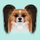Square,Animal,Canine,Puppy,Papillon,Illustration,Purebred Dog,Pets,Long Hair,Dog,Small,Young Animal,Animal Body Part,Animal Head