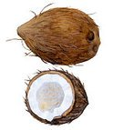 Nature,Drawing - Activity,Ripe,Single Object,Brown,Illustration,Freshness,Food,Fruit