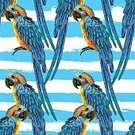 Animal,Beak,Bird,Parrot,Backgrounds,Illustration,Background