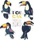 Color Image,Nature,Animal Wildlife,Drawing - Art Product,Animal,Beak,Animals In The Wild,Bird,Tropical Bird,Toucan,Zoo,Pencil Drawing,Illustration,Group Of Objects,Sitting,Colors,Black Color,Multi Colored