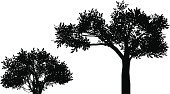 Bush,Silhouette,Tree,Vector,Two Objects,Ilustration,Plant,Nature,Deciduous Tree,Illustrations And Vector Art