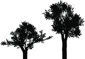 Tree,Plant,Silhouette,Two Objects,Nature,Plants,Illustrations And Vector Art,Vector,Ilustration,Deciduous Tree