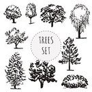 Oak Tree,Set,Beech Tree,Tree Trunk,Group of Objects,Collection,Computer Graphic,Black Color,Silhouette,Icon Set,Poplar Tree,Thin,Chestnut Tree,Wound,Maple Tree,Vector,Outline,Deciduous Tree,Nature,Ink,Tree,Isolated,Birch Tree,Sapling,White,Computer Icon,Part Of,Plant,Design Element,Part Of A Series,Ash Tree,Variation,Bare Tree,Leaf,Branch,Pen,Backgrounds