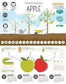 Lawn Mover,Freshness,Growth,No People,Equipment,Food,Agriculture,Lifestyles,Farm,Fruit,Tree,Apple - Fruit,Apple Tree,Gardening,Wheelbarrow,Vegetable Garden,Illustration,Dieting,Collection,Infographic,Red