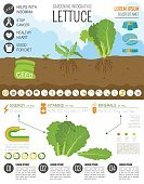 Equipment,Food,Symbol,Bed,Agriculture,Lifestyles,Salad,Farm,Vegetable,Leaf,Lettuce,Computer Icon,Gardening,Vegetable Garden,Illustration,Organic,Watering,Vegetarian Food,Lawn Mover,No People,Infographic