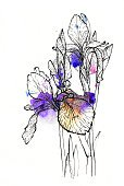 Single Flower,Flower,Sketch,Blossoming,Bouquet,Drawing - Art Product,Paint,Blossom,Multi Colored,Iris - Plant,Painted Image,Flower Head,Art,Illustration,Purple,Watercolor Painting