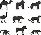 81352,Silhouette,No People,Safari,Sign,Animal,Leopard,Dromedary Camel,Collection,Hyena,Lemur,Warthog,Illustration,Zoo,Camel,Symbol,Ostrich,Isolated,Zebra,Lion - Feline,Vector,Single Object,Domestic Animals,Side View,Safari
