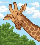 Giraffe,Zoo,Africa,Animal,Curiosity,Illustrations And Vector Art,Wild Animals,Animals And Pets,Mammals,One Animal,Vertebrate,Named Animal,Mammal