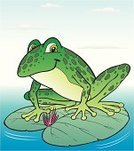 Frog,Swamp,Animal,Vector,Ilustration,Animals And Pets,isolated in white