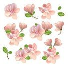 No People,Flower,Collection,Illustration,Magnolia,Pink Color