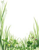 Clover,Grass,Blade of Grass,Lawn,Frame,Green Color,Vector,Copy Space,Growth,Plants,Nature Backgrounds,Nature,Illustrations And Vector Art,No People,Ilustration