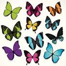 Butterfly - Insect,Vector,Pattern,Flower,Monarch Butterfly,Ilustration,Green Color,Silhouette,Wing,Flying,Black Color,Shape,Animal Themes,Image,Color Image,White,Insect,Elegance,Nature,Wildlife,Fanned Out,Painted Image,Vector Florals,Insects,Spread Wings,Symmetry,Illustrations And Vector Art,Animals And Pets,Nature,Summer