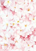 Vertical,No People,Cherry Blossom,Flower,Painted Image,Petal,Illustration,Watercolor Painting,Paintings,Blossom,Textured Effect,White Color,Pink Color,Pastel Colored,Yellow