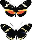 Painted Image,Color Image,Drawing - Activity,Wing,Beauty In Nature,Butterfly - Insect,Heliconius Butterfly,Animal Antenna,Vector,Ilustration,Nature