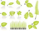 Leaf,Nature,Symbol,Growth,Plant,Grass,Isolated,Vector,Computer Icon,Ilustration,Set,Green Color,Vector Icons,Illustrations And Vector Art