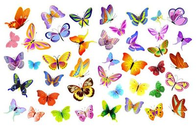 Vector variety of beautiful butterfly