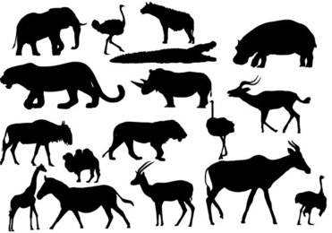 African Animals African Animals AÄ° Animal