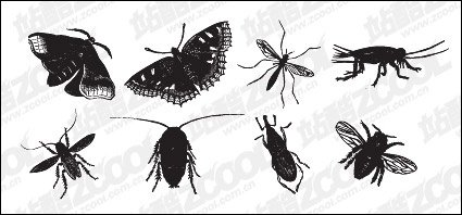 Black and white insect