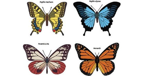 Colorful Butterflies Free