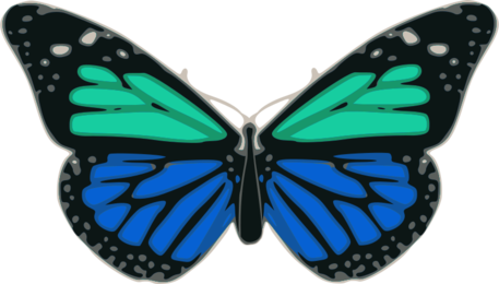 Butterfly 02 Turquoise Blue