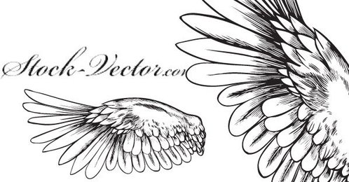 Free Vector Angelic Wing