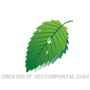 GREEN LEAF VECTOR ILLUSTRATION.eps