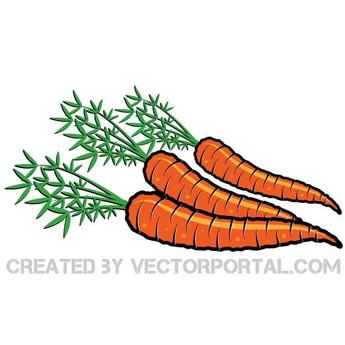 CARROTS VECTOR ILLUSTRATION.eps