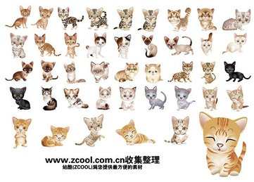 40 version of a variety of cute little kitty