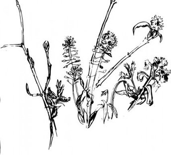 Forest_plants2004