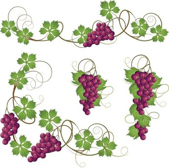 Purple Grapes And Grape Leaves