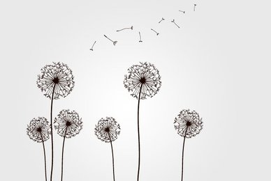 Dandelions with Flying Seeds