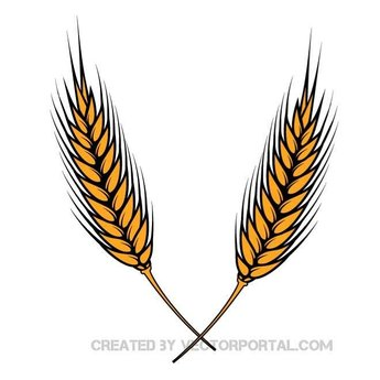 VECTOR IMAGE OF WHEAT.eps