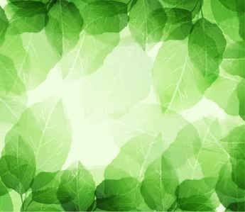 Fresh and Green Leaves Background