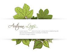 Autumn Leafs with Space for Text