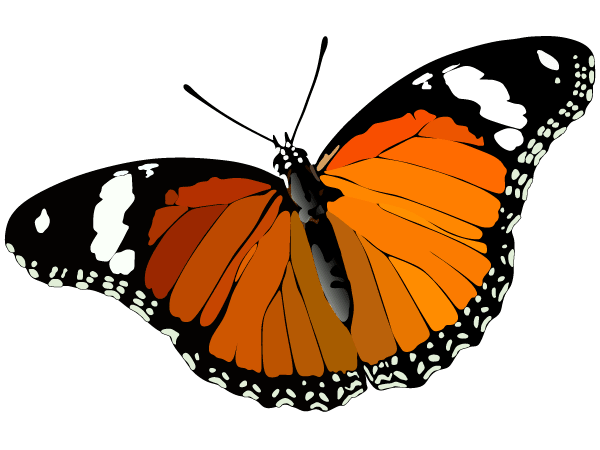 free butterfly psd files vectors graphics 365psd com rh 365psd com butterfly vector graphic butterfly vector graphic