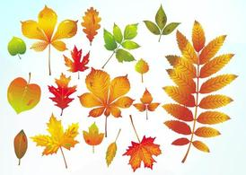 Autumn Vector Leaves