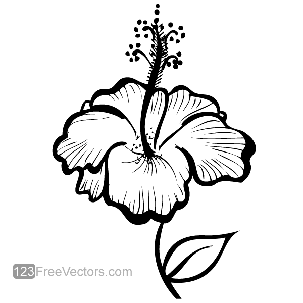Free hand drawn hibiscus flower psd files vectors graphics 365psd com