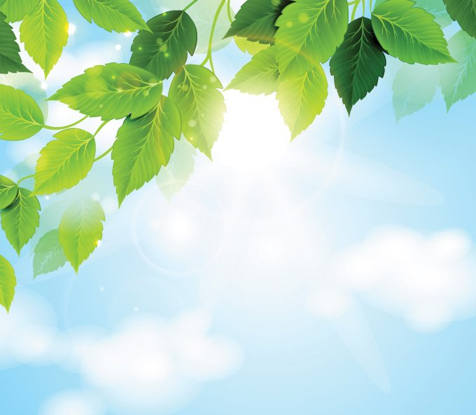 Sunny Sky with Green Leaves Background (Free)